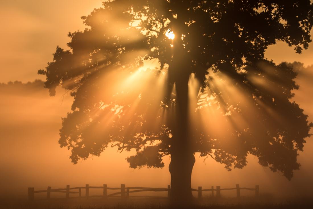 sun tree shade solar pv